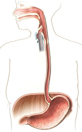 esophagus-passing-diaphragm